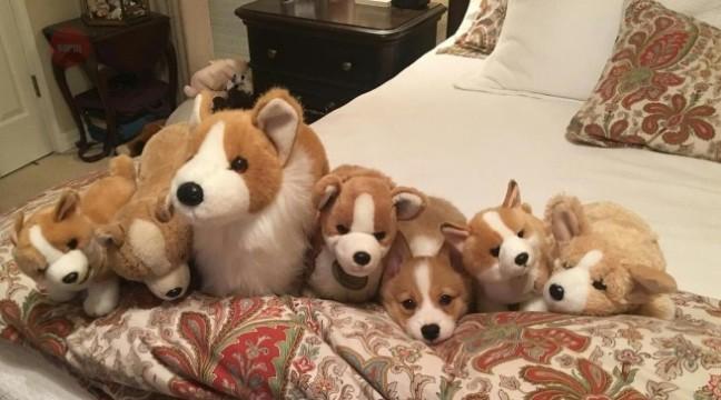 Гра на уважність: знайдіть живу собаку