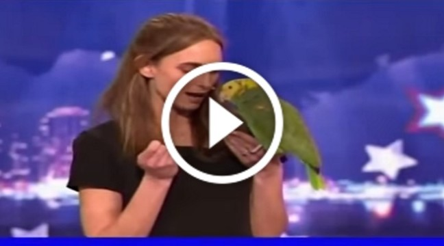 Балакучий папуга підкорив американське шоу талантів