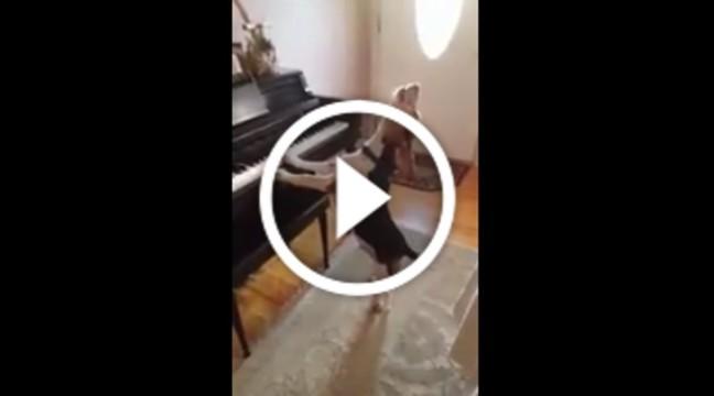 Пес грає на фортепіано і співає дуже сумну пісню
