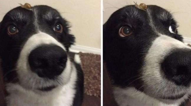 8 твітів про те, як класно мати вдома собаку