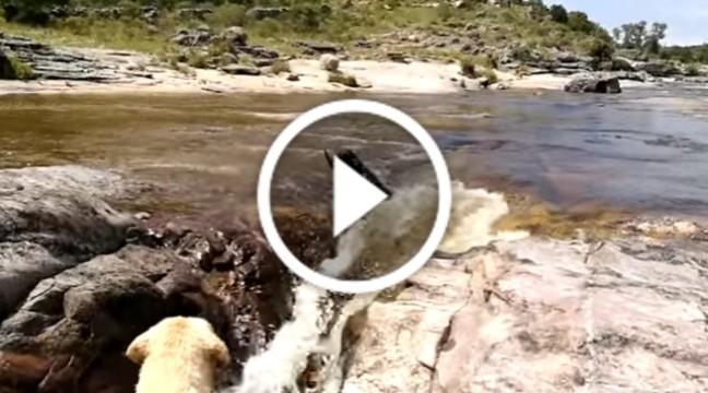 Мережу сколихнуло відео з собакою, який врятував свого друга з бурхливої річки