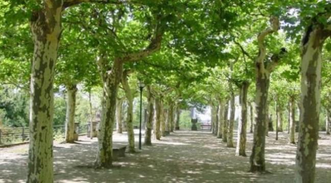 Пенсіонер з Миколаєва самотужки висадив у місті 20 тисяч дерев