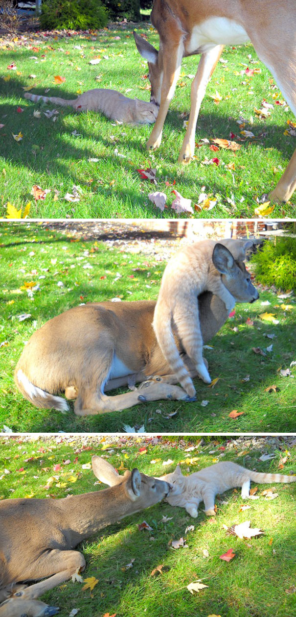 animals-visiting-people-177-591056cd366e2__605