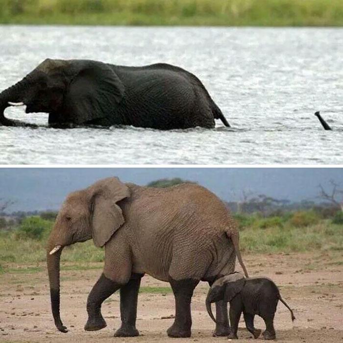 cute-baby-elephants-42-5901baa425c6e__700