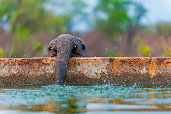 cute-baby-elephants-44-5901f54331c30__700
