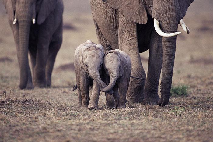 cute-baby-elephants-50-5902071911e92__700