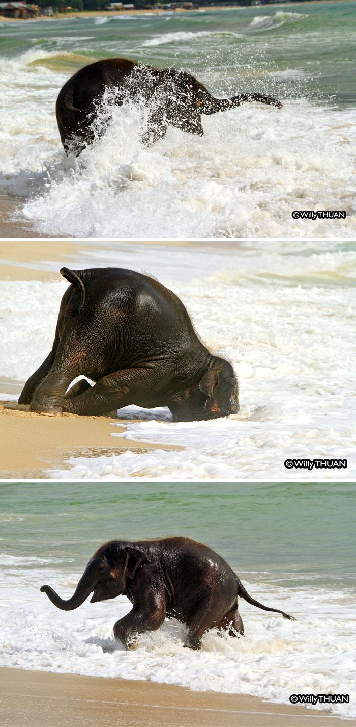 cute-baby-elephants-9-59004672a0db4__700