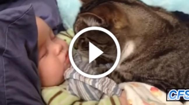 Спільне життя котів і немовлят – наймиліше відео на YouTube